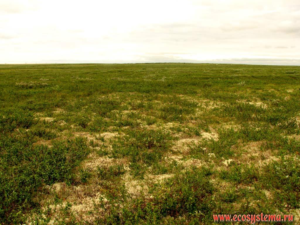 Where is the Taz Peninsula